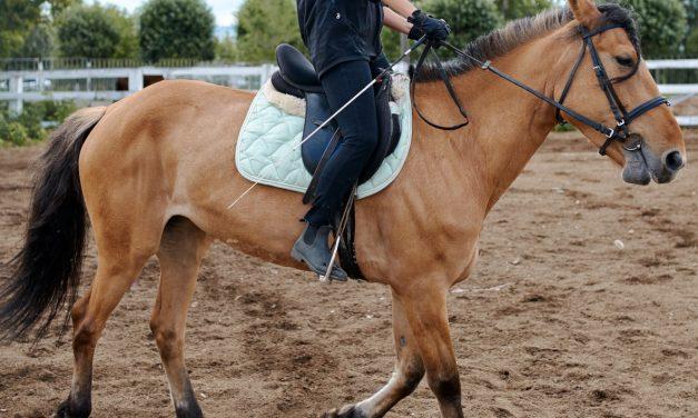 Sztyblety damskie – nie tylko do jazdy konno
